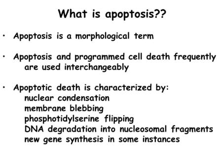 What is apoptosis?? Apoptosis is a morphological term