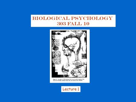 Biological Psychology 303 Fall 10 Lecture 1. Biopsychology: the study of the biological basis of behavior the study of :  Neuroanatomy: structure of.
