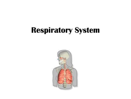 Respiratory System. Functions Gas exchange = respiration [series of events that includes ventilation, external respiration, transport of gases & internal.