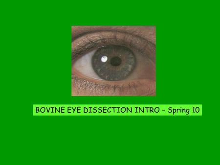 BOVINE EYE DISSECTION INTRO – Spring 10. Can humans or non-human animals see in the dark?