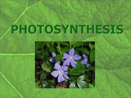 "PHOTOSYNTHESIS. Photosynthesis – Making Sugar from Sunlight "" Life is woven out of air by light "" Jacob Moleschott Dutch."