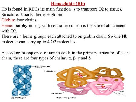 Hemoglobin (Hb) Hb is found in RBCs its main function is to transport O2 to tissues. Structure: 2 parts : heme + globin Globin: four chains. Heme: porphyrin.