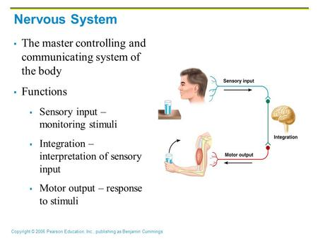 Nervous System The master controlling and communicating system of the body Functions Sensory input – monitoring stimuli Integration – interpretation of.
