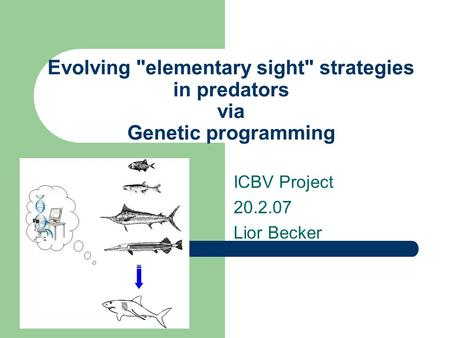 Evolving elementary sight strategies in predators via Genetic programming ICBV Project 20.2.07 Lior Becker.
