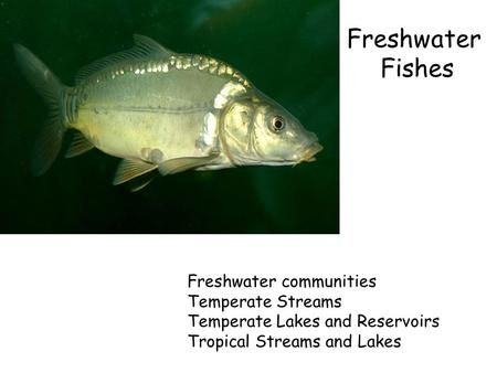 Freshwater Fishes Freshwater communities Temperate Streams Temperate Lakes and Reservoirs Tropical Streams and Lakes.