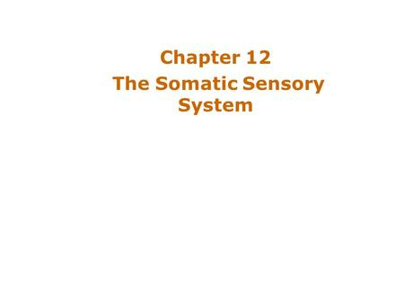 Chapter 12 The Somatic Sensory System. Introduction Somatic Sensation –Enables body to feel, ache, chill –Responsible for touch and pain –Somatic sensory.