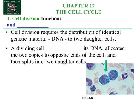 1. Cell division functions- _________________________ and ____________ Cell division requires the distribution of identical genetic material - DNA - to.
