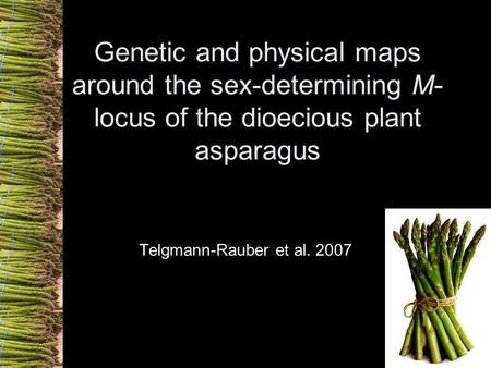 Genetic and physical maps around the sex-determining M- locus of the dioecious plant asparagus Telgmann-Rauber et al. 2007.