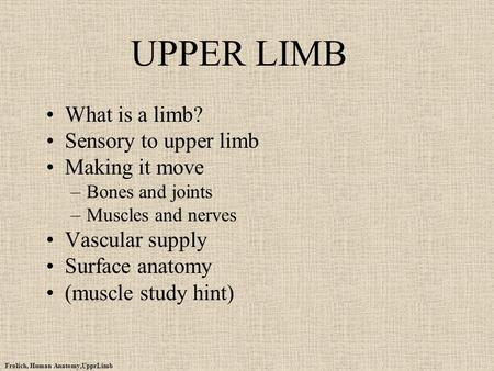 UPPER LIMB What is a limb? Sensory to upper limb Making it move