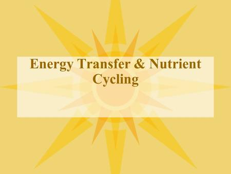 Energy Transfer & Nutrient Cycling