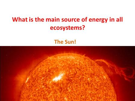 What is the main source of energy in all ecosystems? The Sun!