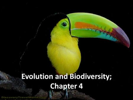 Chapter 4: Biodiversity <strong>and</strong> Evolution