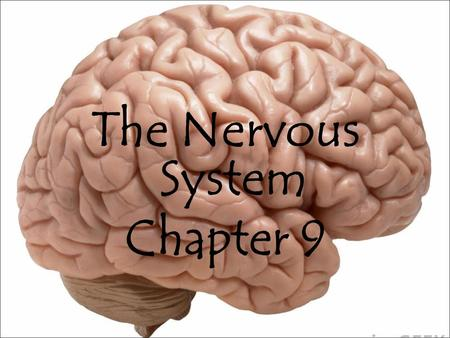 The Nervous System Chapter 9. Learning Targets By end of this lesson, you should be able to: Differentiate between the central and peripheral nervous.