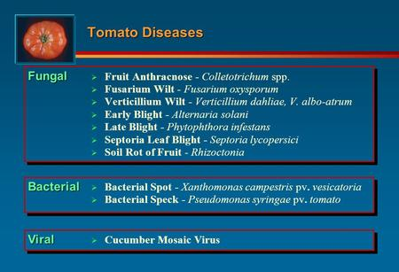 Tomato Diseases Fungal Bacterial Viral
