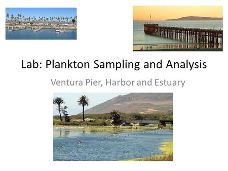 Lab: Plankton Sampling and Analysis Ventura Pier, Harbor and Estuary.