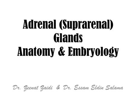 Adrenal (Suprarenal) Glands Anatomy & Embryology