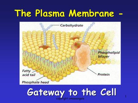 1 The Plasma Membrane The Plasma Membrane - Gateway to the Cell copyright cmassengale.