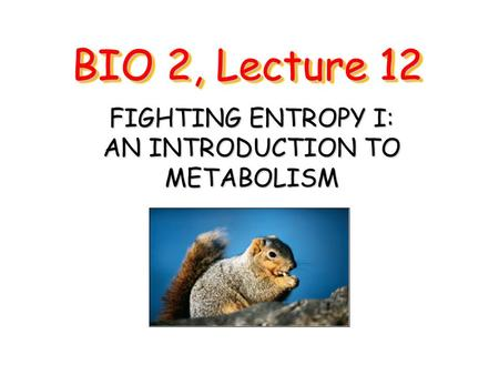 BIO 2, Lecture 12 FIGHTING ENTROPY I: AN INTRODUCTION TO METABOLISM.