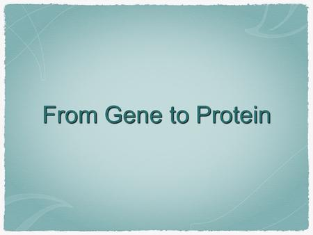 From Gene to Protein. Genes code for... Proteins RNAs.