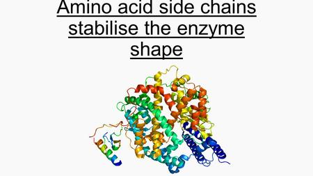 Amino acid side chains stabilise the enzyme shape.