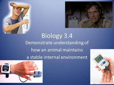 Biology 3.4 Demonstrate understanding of how an animal maintains a stable internal environment.