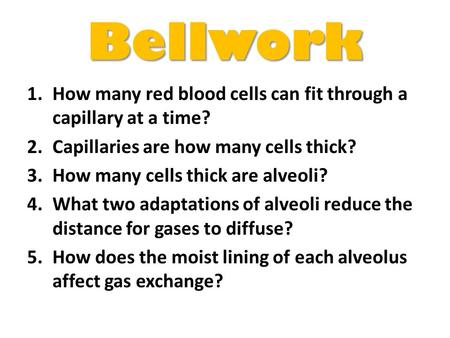 Bellwork How many red blood cells can fit through a capillary at a time? Capillaries are how many cells thick? How many cells thick are alveoli? What two.