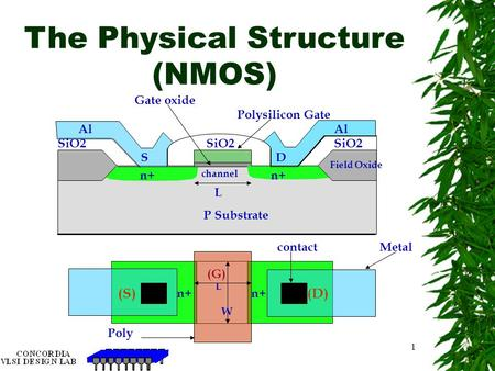 The Physical Structure (NMOS)
