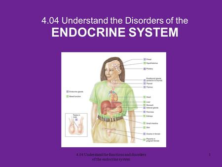 4.04 Understand the Disorders of the ENDOCRINE SYSTEM