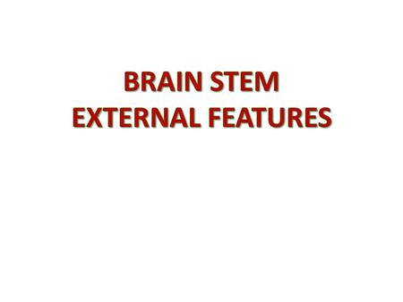 BRAIN STEM EXTERNAL FEATURES