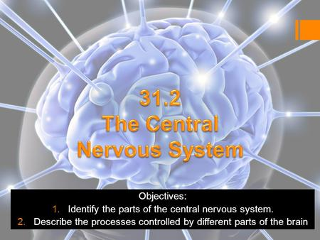 Objectives: 1.Identify the parts of the central nervous system. 2.Describe the processes controlled by different parts of the brain.