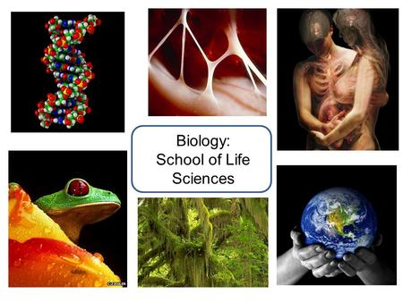 Biology: School of Life Sciences. Tutorials and Practical work Extensive Tutorial system Small groups (4-5 students) Every week in Year 1, with Personal.