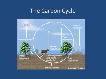 The Carbon Cycle. 1. How do producers like trees, algae, and grass obtain carbon? A. They get it from the ground. B. They make carbon from scratch. C.
