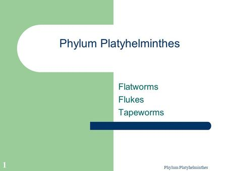 Phylum Platyhelminthes 1 Flatworms Flukes Tapeworms.