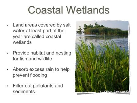 Coastal Wetlands Land areas covered by salt water at least part of the year are called coastal wetlands Provide habitat and nesting for fish and wildlife.