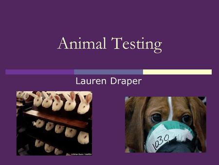 Animal Testing Lauren Draper. Animal Testing  History  Animal Welfare Act 1999  Pros  Cons  Current NZ issue: Psychoactive Substances Act (aka party.