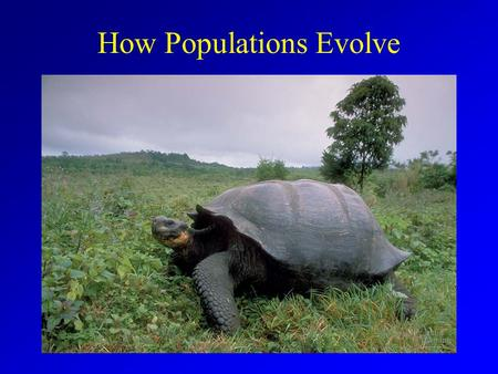 How Populations Evolve. Historical Theories Anaximander (~2500 yrs ago) Aristotle Georges Buffon (1700's) Jean Baptist Lemark (late 1700's - early1800's)