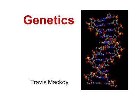 Genetics Travis Mackoy. Gregor Mendel 1860s Developed basic principles of genetics Studied genetics of pea plants.