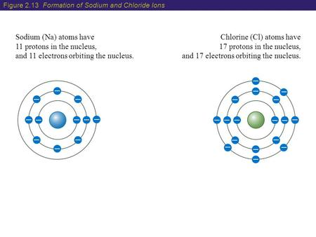 Sodium (Na) atoms have 11 protons in the nucleus, and 11 electrons orbiting the nucleus. Chlorine (Cl) atoms have 17 protons in the nucleus, and 17 electrons.