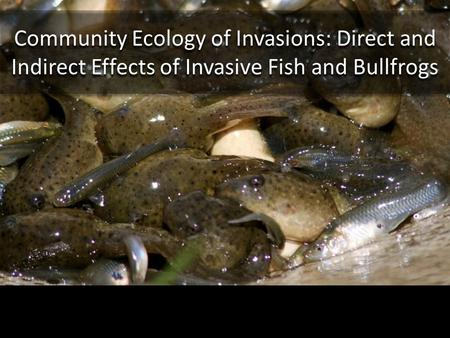Community Ecology of Invasions: Direct and Indirect Effects of Invasive Fish and Bullfrogs.
