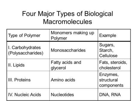 Four Major Types Of Biological Macromolecules