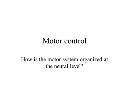 How is the motor system organized at the neural level?