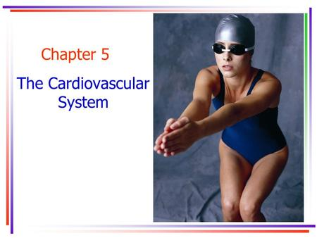 Chapter 5 The Cardiovascular System. Key Concepts.
