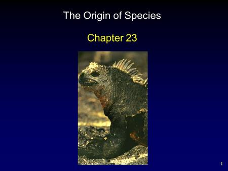 1 The Origin of Species Chapter 23. 2 Outline The Nature of Species Pre and Postzygotic Isolating Mechanisms Geography of Speciation Hawaiian Drosophila.