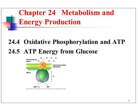 1 24.4 Oxidative Phosphorylation and ATP 24.5 ATP Energy from Glucose Chapter 24 Metabolism and Energy Production.
