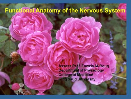 Assess Prof. Fawzia Al-Rouq Department of Physiology College of Medicine King Saud University Functional Anatomy of the Nervous System.