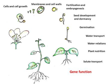 Cells and cell growth Membranes and cell walls Fertilization and embryogenesis Seed development and dormancy Germination Water transport Water relations.