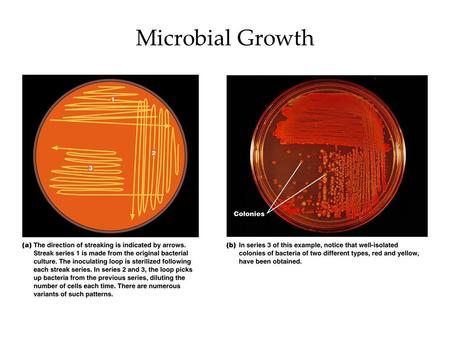 Microbial Growth. What do they need to grow? Physical needs –Temperature, proper pH, etc. Chemical needs –Molecules for food, ATP production, coenzymes,