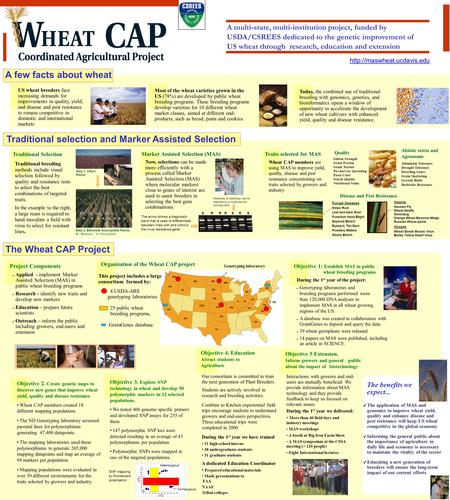 A multi-state, multi-institution project, funded by USDA/CSREES dedicated to the genetic improvement of US wheat through research, education and extension.
