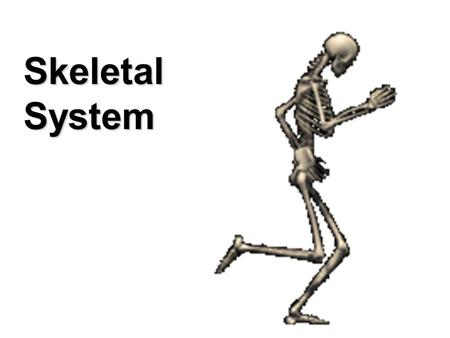 SKELETAL SYSTEM Skeletal System. Support and movement Protection (brain, lungs) Mineral Storage of Calcium and Phosphate Red Blood Cell Production (long.