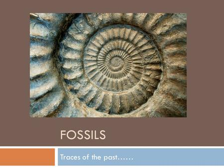 Fossils Traces of the past…….